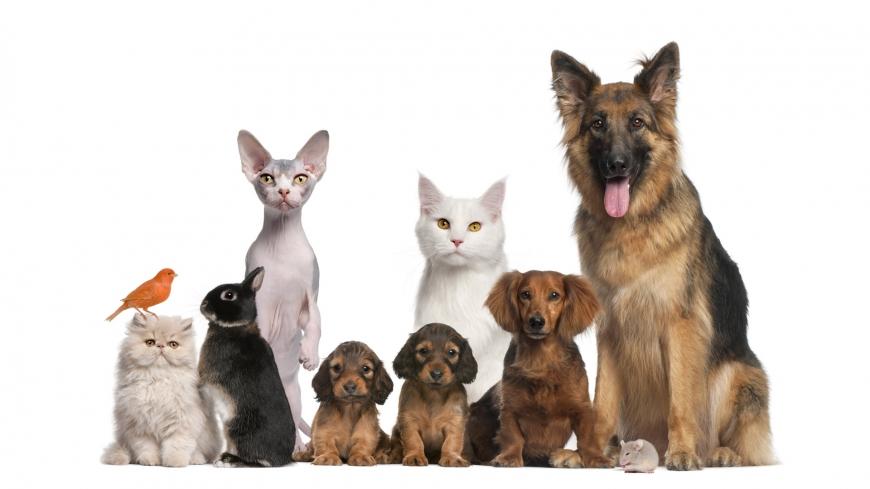 Выбор домашнего питомца, кошки или собаки