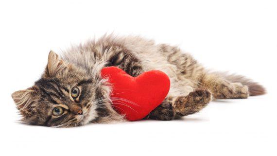 Патологии сердца у животных
